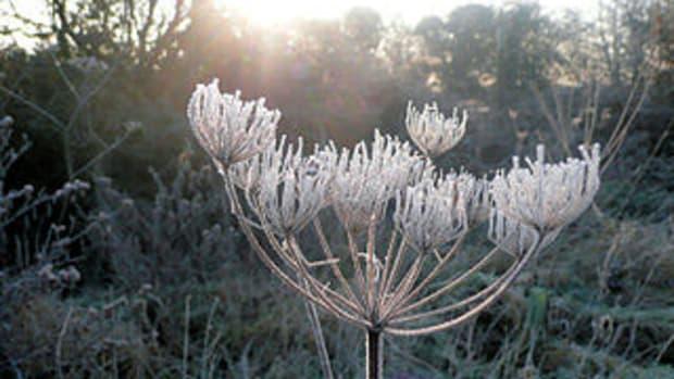 frost in garden