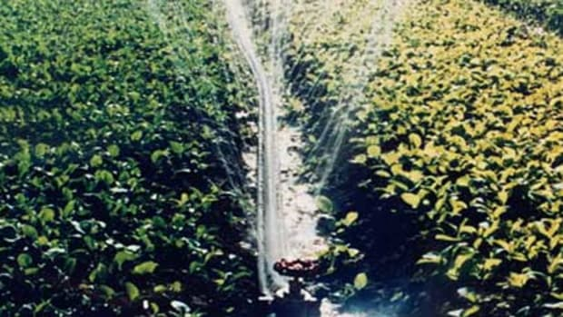 Manage water in the garden with a soaker hose.