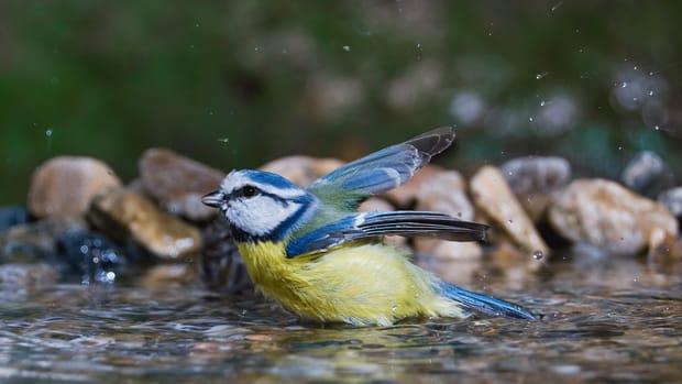 Bird Bath Horticulture