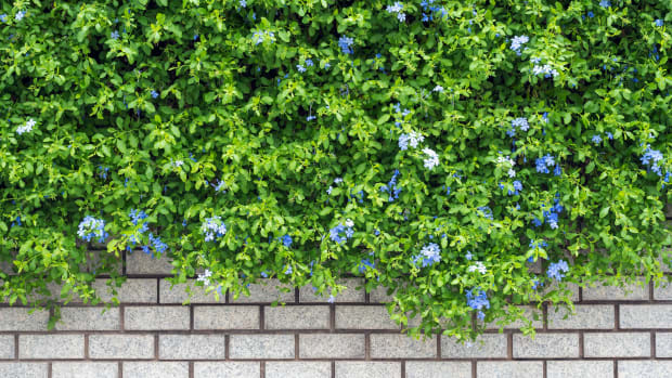 peaceful garden wall with vine