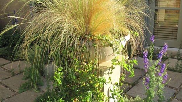 grass planter