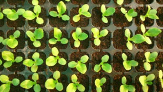 start seed