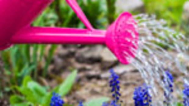 watering1at150