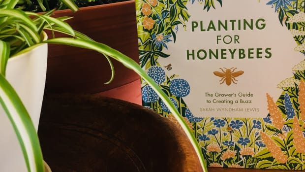 plant for honeybees