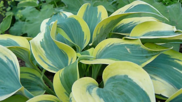 foliageplants