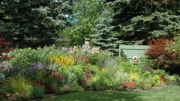 Topdressing your perennials in the fall will boost their health and improve the garden overall.