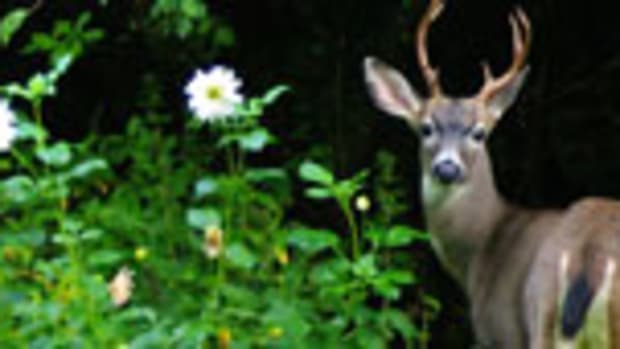 deer-proof plants