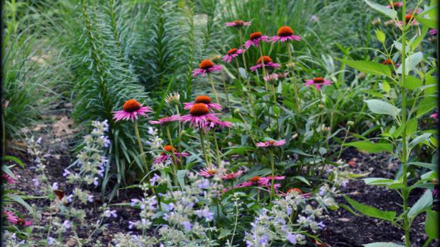 landless gardener