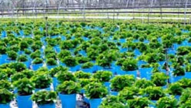 plants at nursery