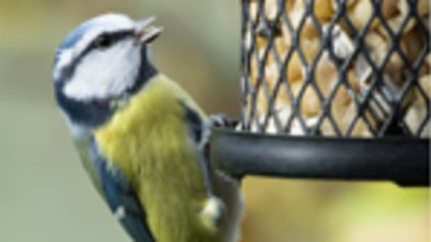 birdonfeeder150