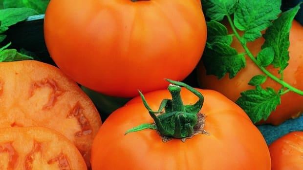 tomato Chef's Choice Orange