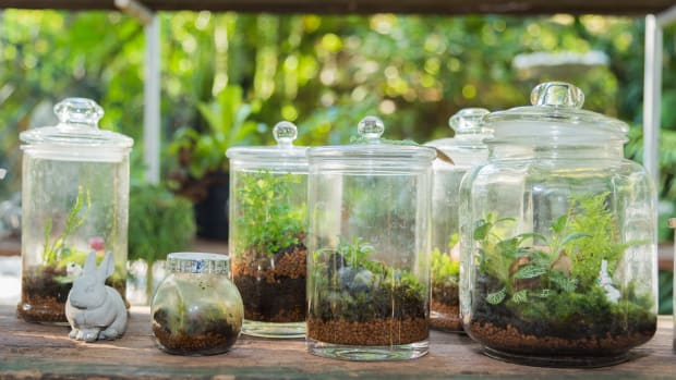 Terrariums Horticulture