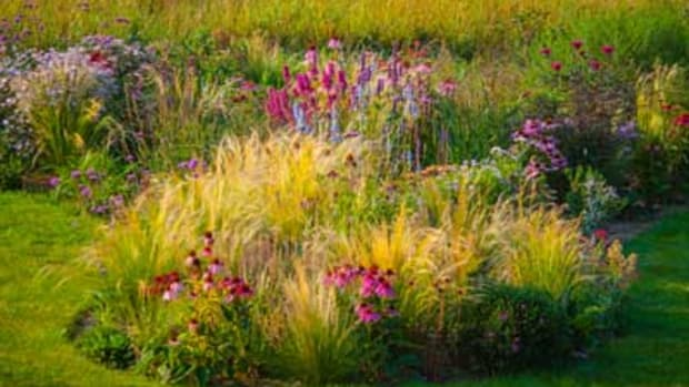 using ornamental grasses