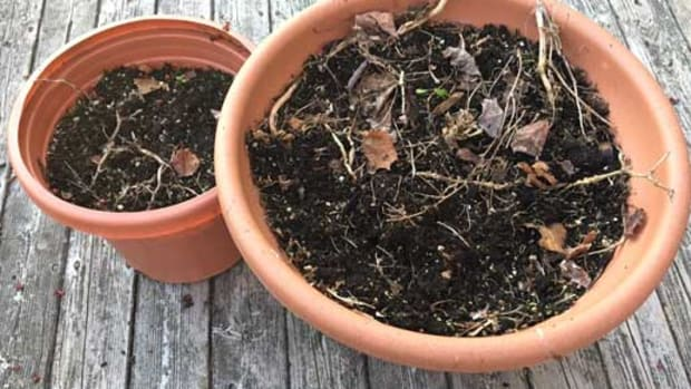 old potting soil