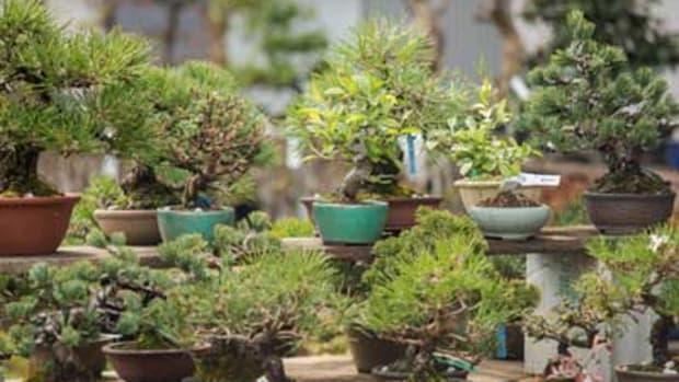 beginner bonsai