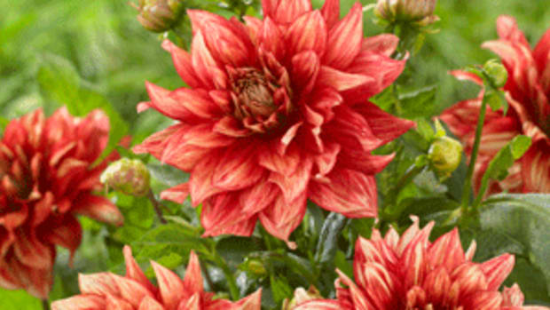 Dazzling Magic Plants We Love Horticulture