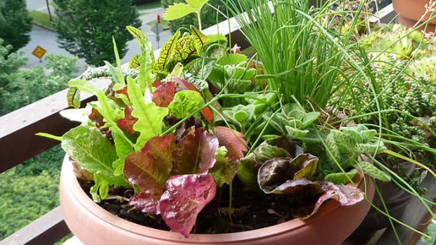 lettucepot