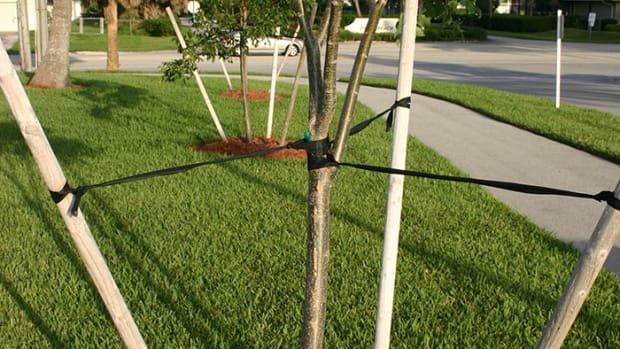 tree.staked