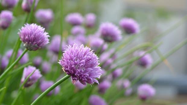 BeePlants