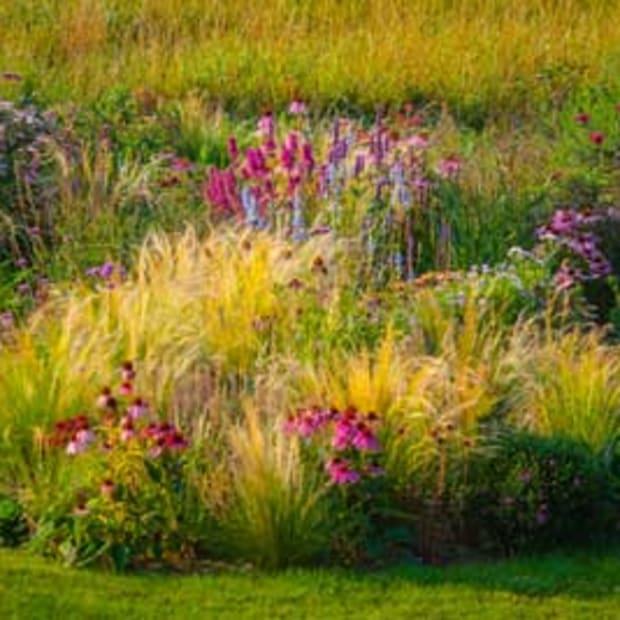 using ornamental grasses