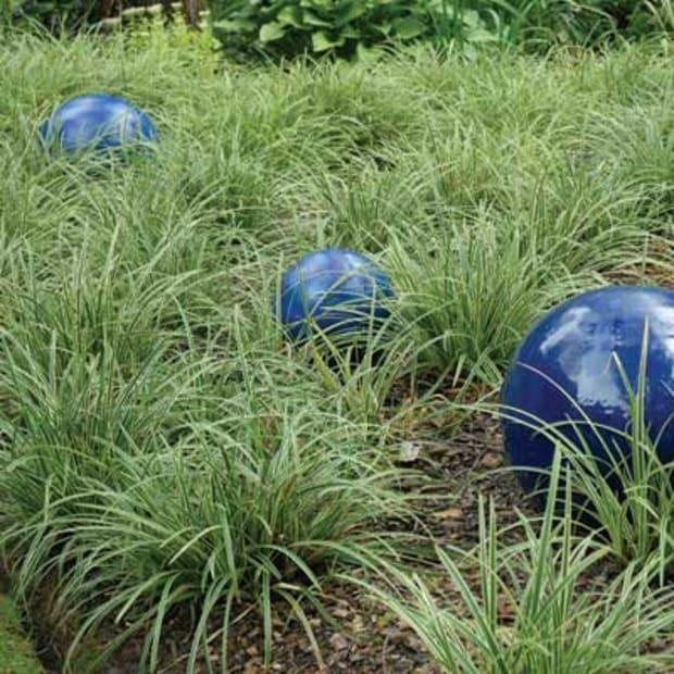 ornamental grasses for shade