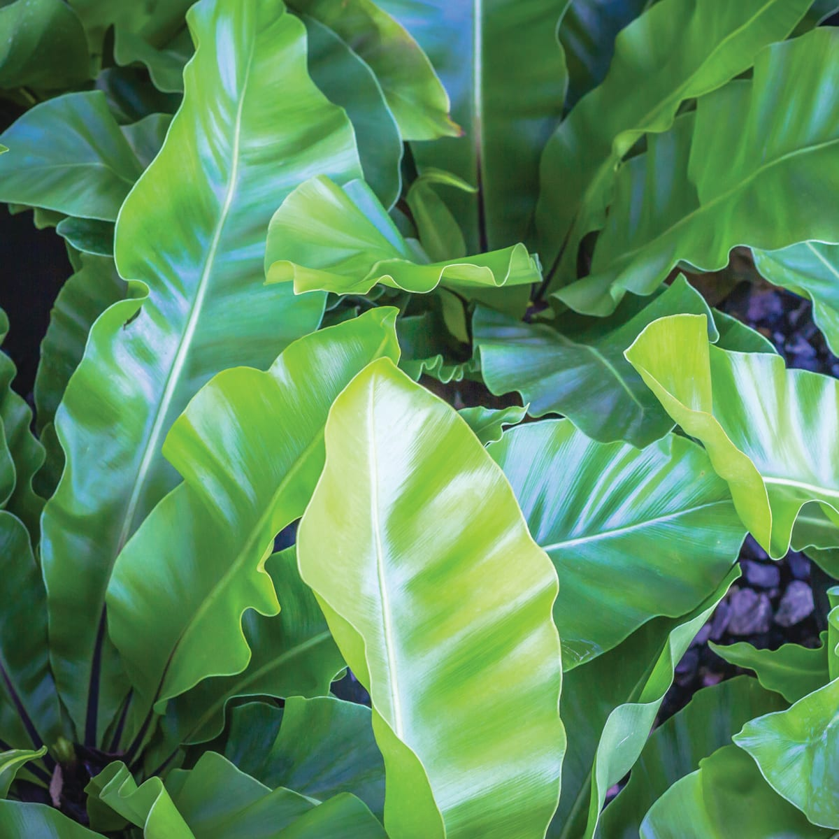 Bold Texture From This Indoor Plant You Can Grow It Horticulture