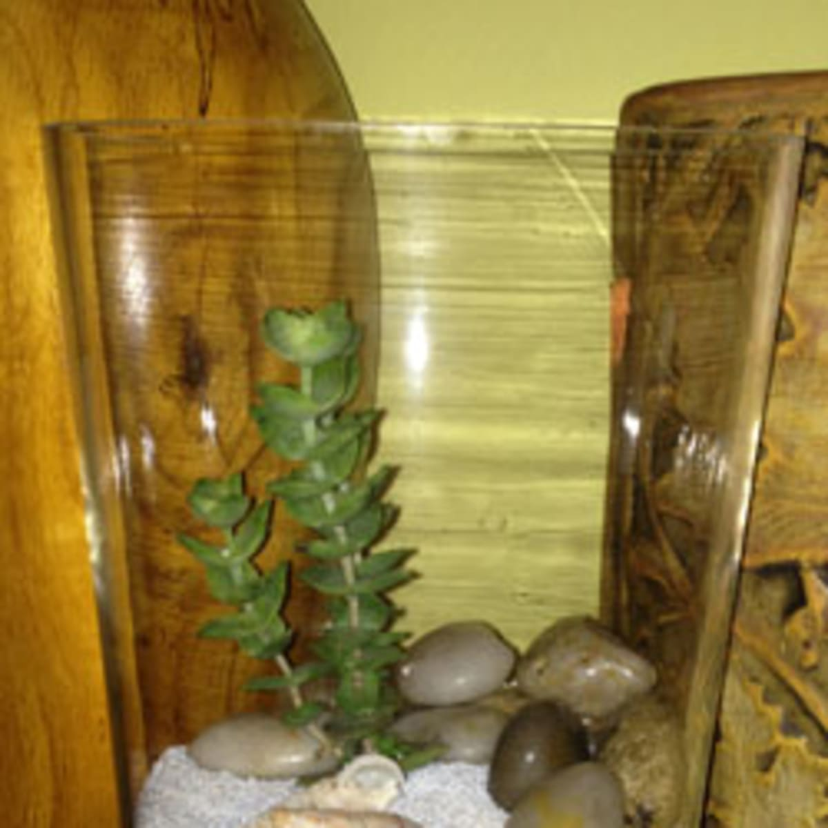 The Key To Growing Cacti And Succulents In A Terrarium Horticulture