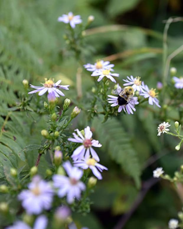 bumblebeeasternew
