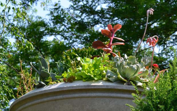 Look Up, Succulent Garden