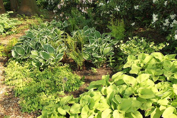Keys to Success When Rearranging Garden Plants