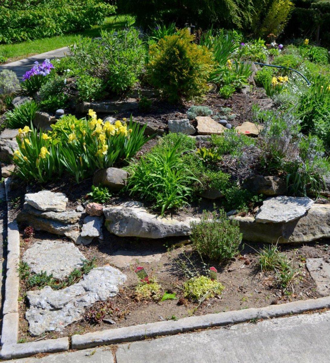 Rejuvenating the Rock Garden with the help of fellow park gardeners.