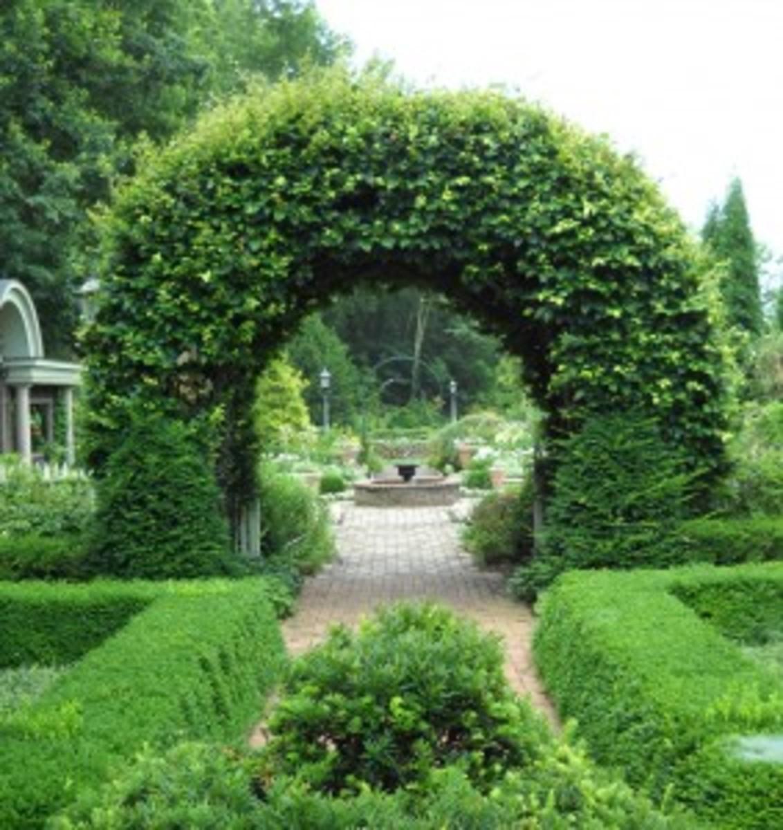 An arch of European beech