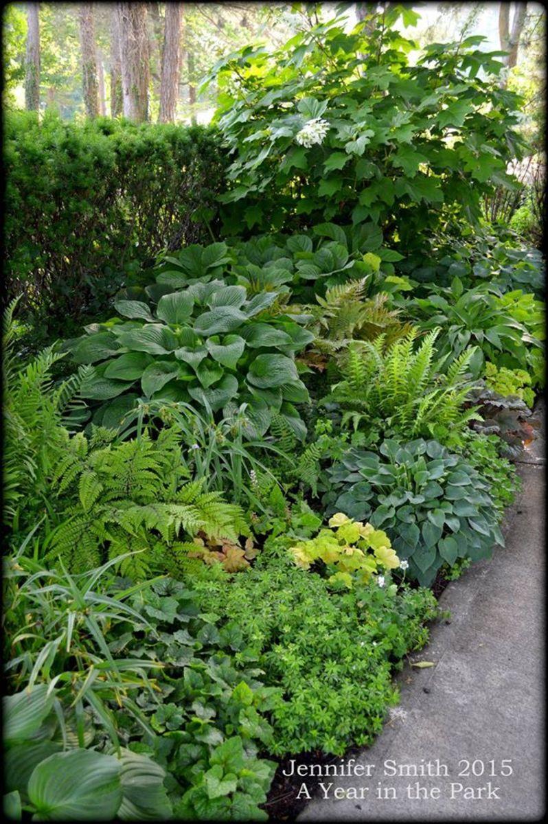 Horticulture Shade Garden Design