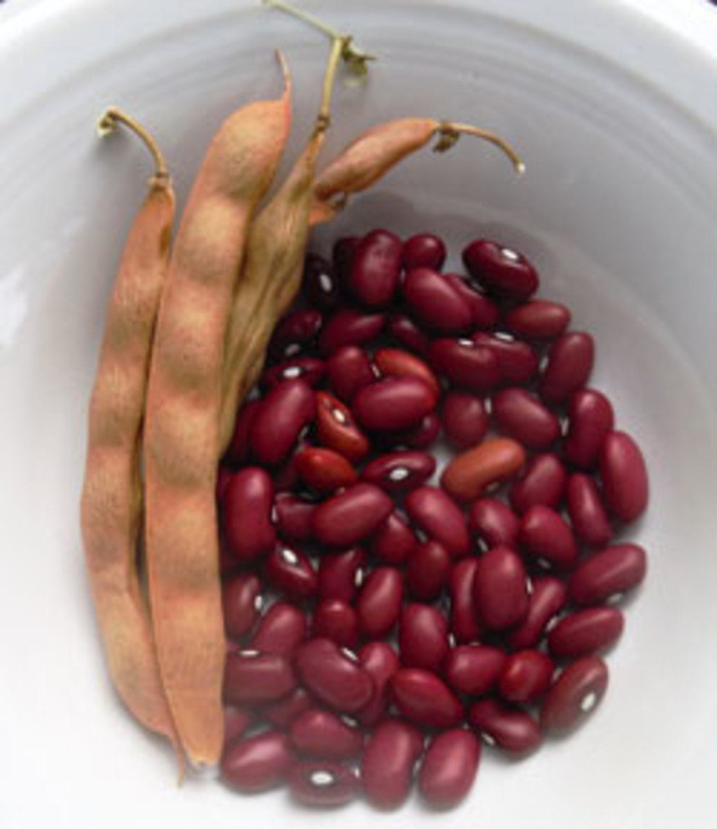 Grow Hopi Red Beans For Perfect Chili Horticulture