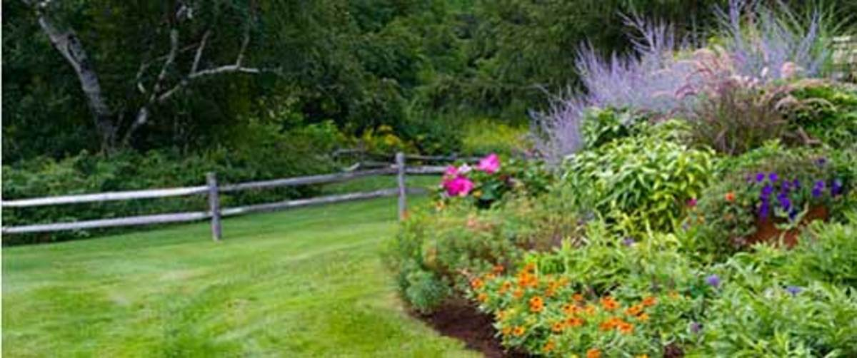 Easy-Summer-Gardening-Chores