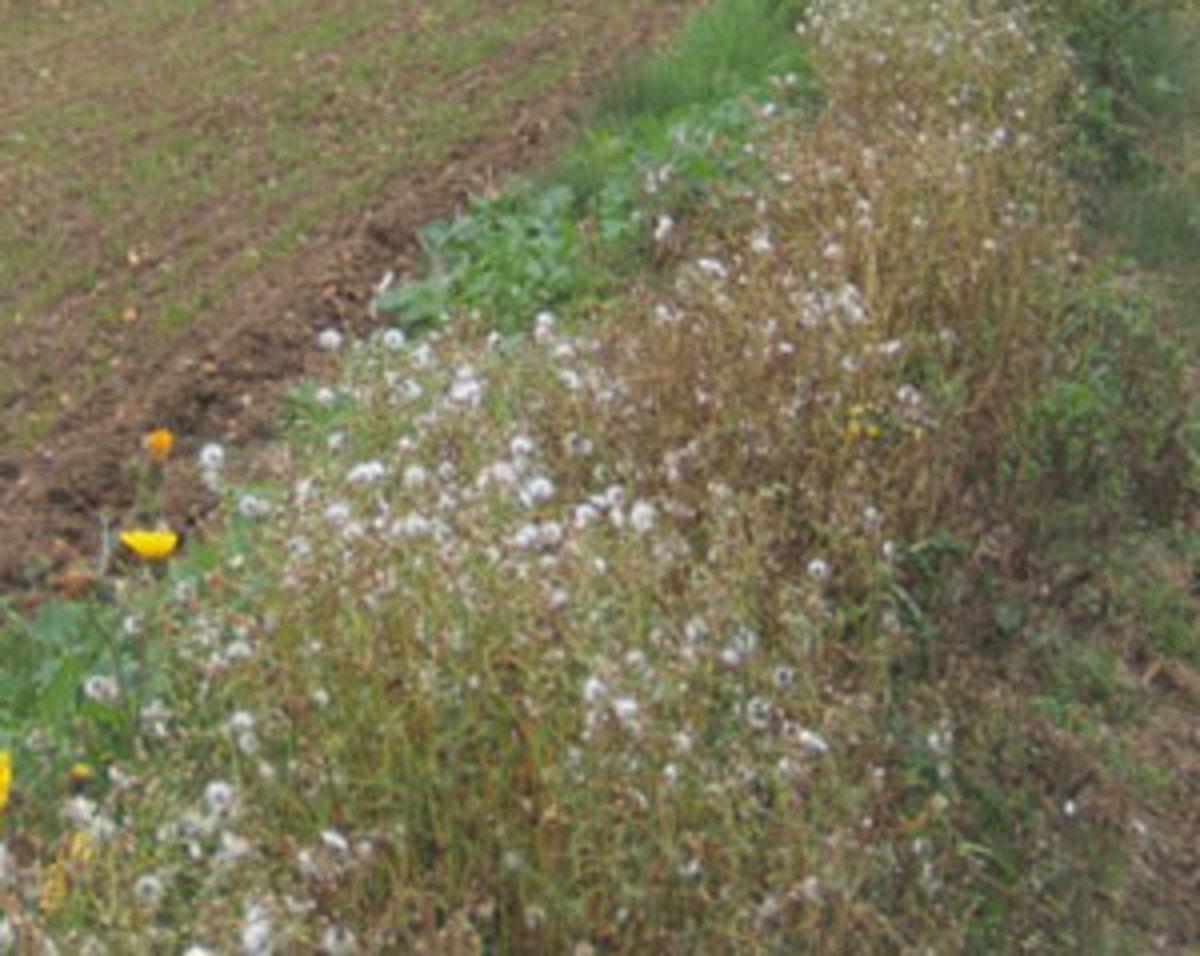 seedheads in fall