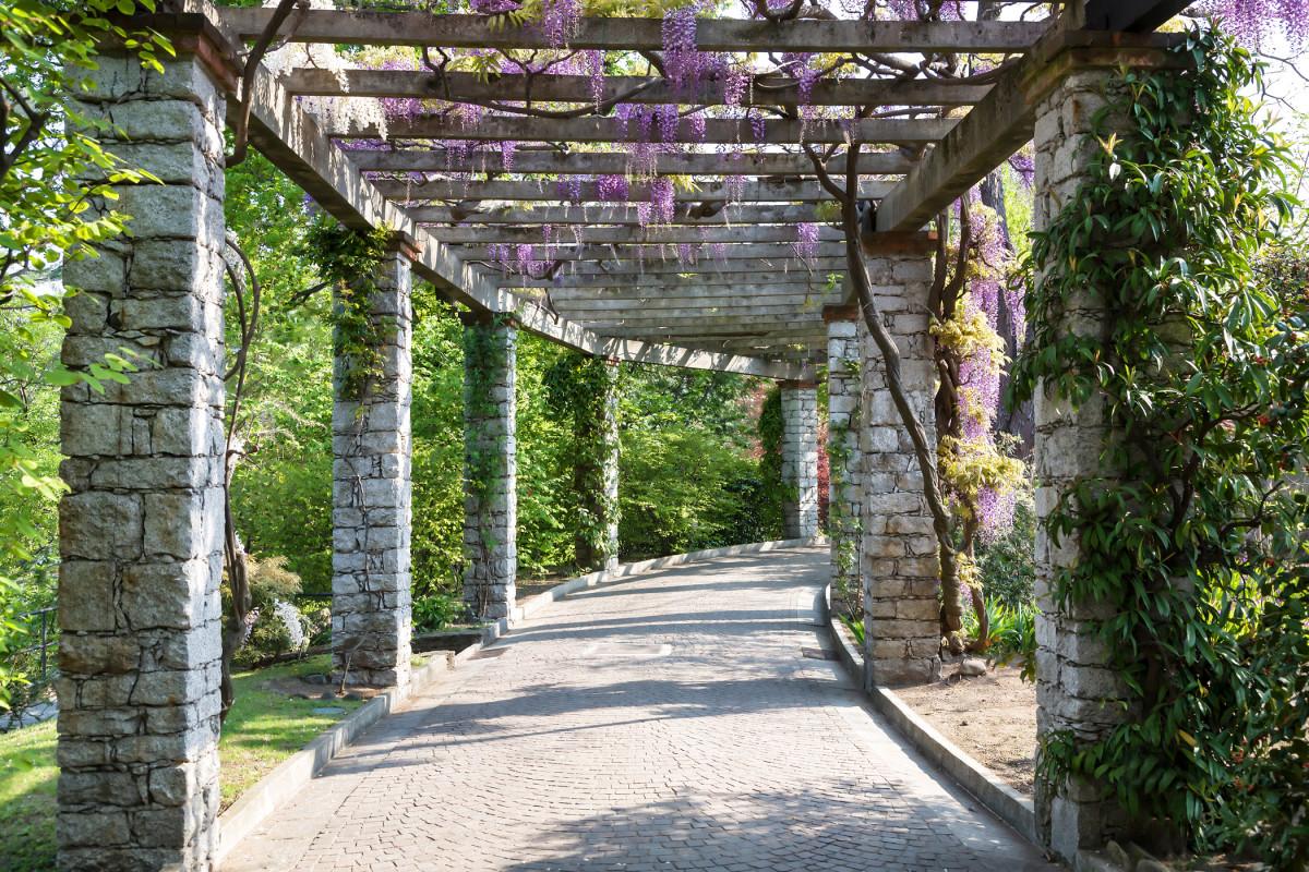 Horticulture magazine wisteria vine