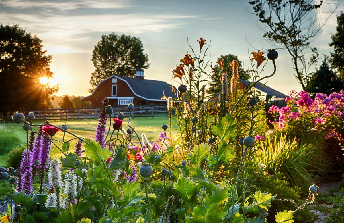 SummerSunrise Horticulture Photo Contest