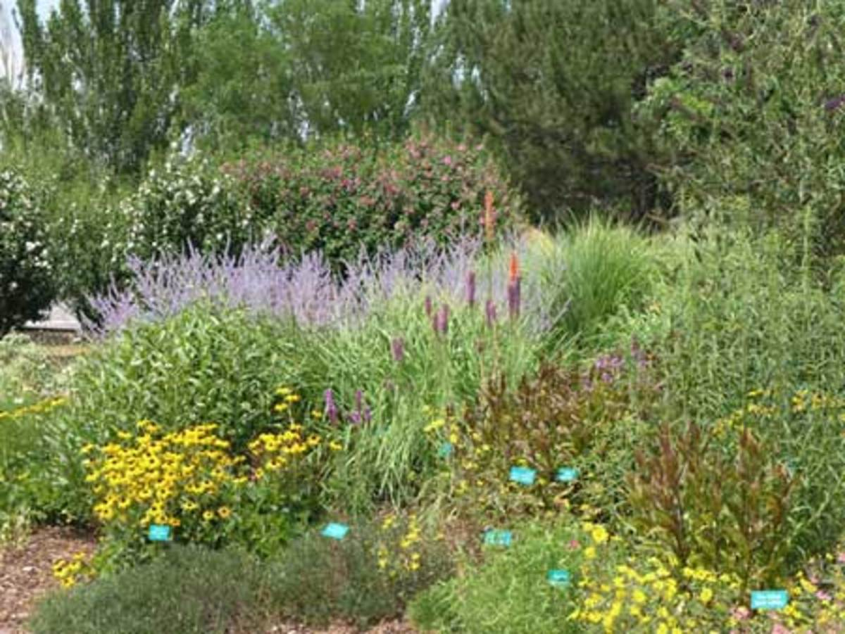 This garden in West Jordan, Utah, is designed to cope with heat, drought and wind. A backdrop of evergreen trees provides shelter from the wind; the plant choices are heat and drought resistant; and a layer of mulch keeps moisture in the soil.