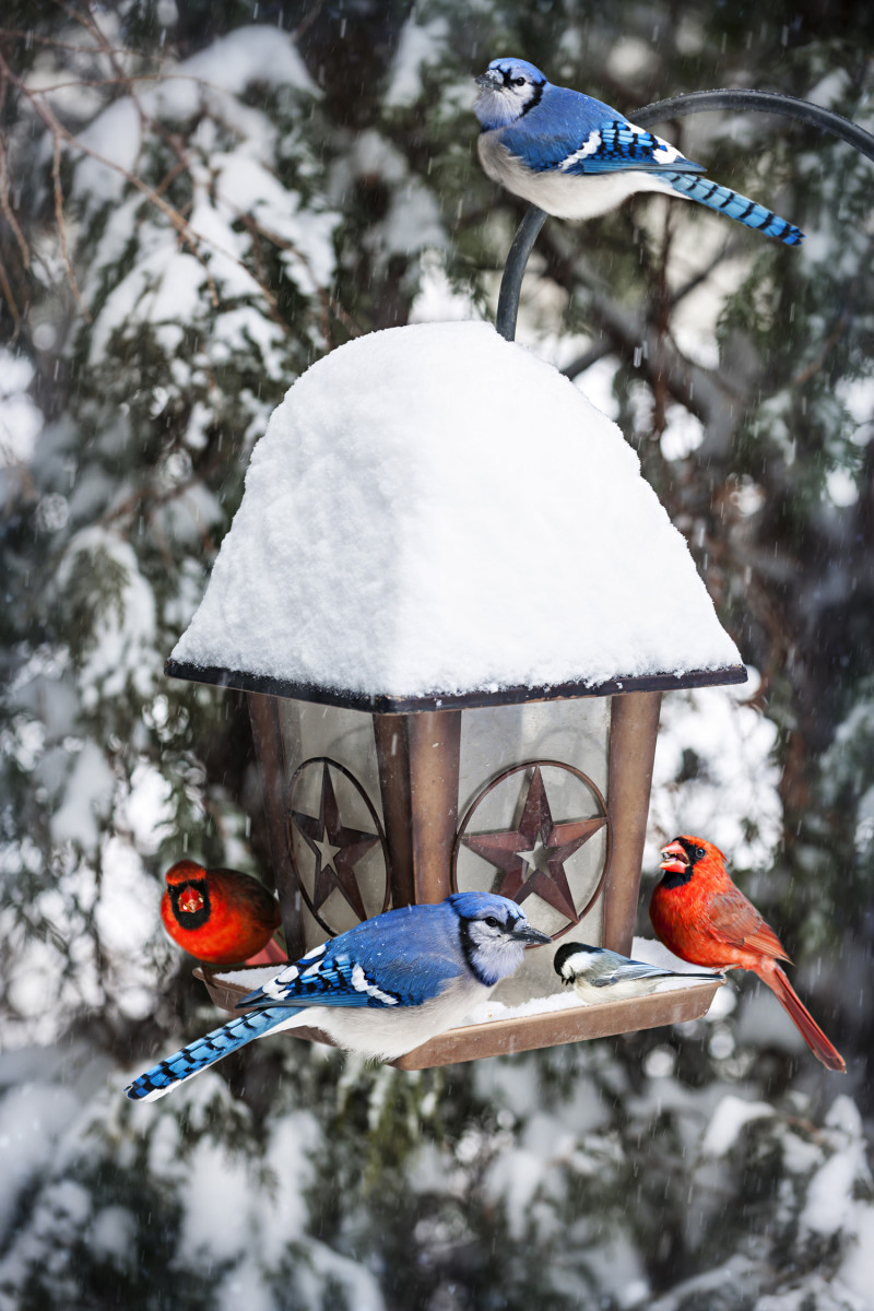 Winter Bird Care Horticulture