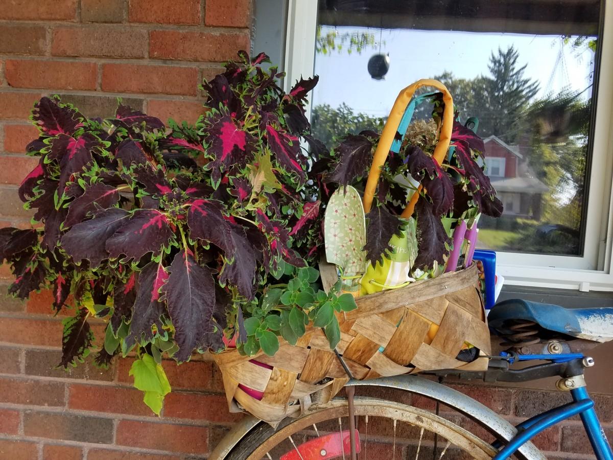 overwinter plants