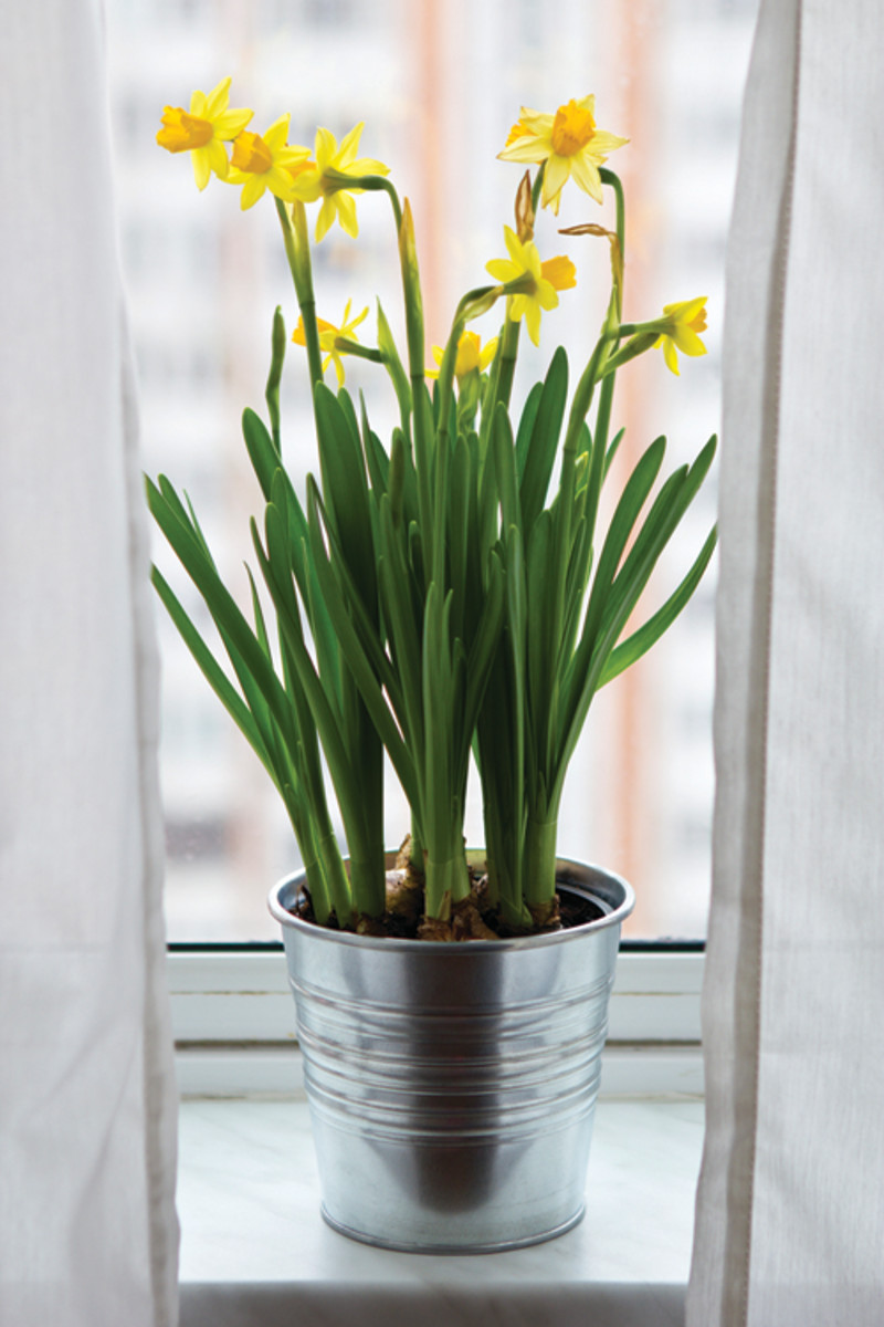 overwinter containers