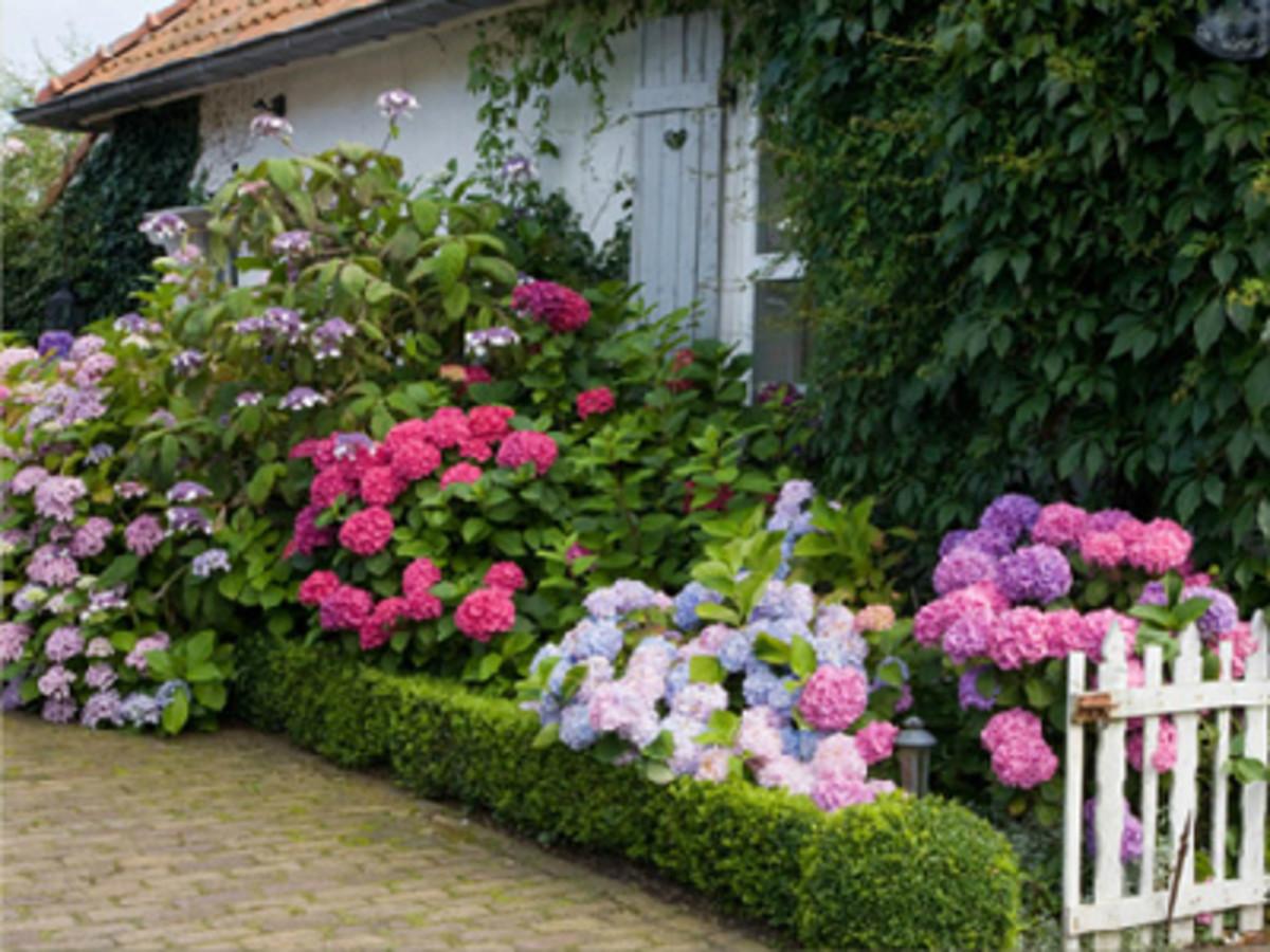 Mini Garden Makeovers HorticultureHorticulture