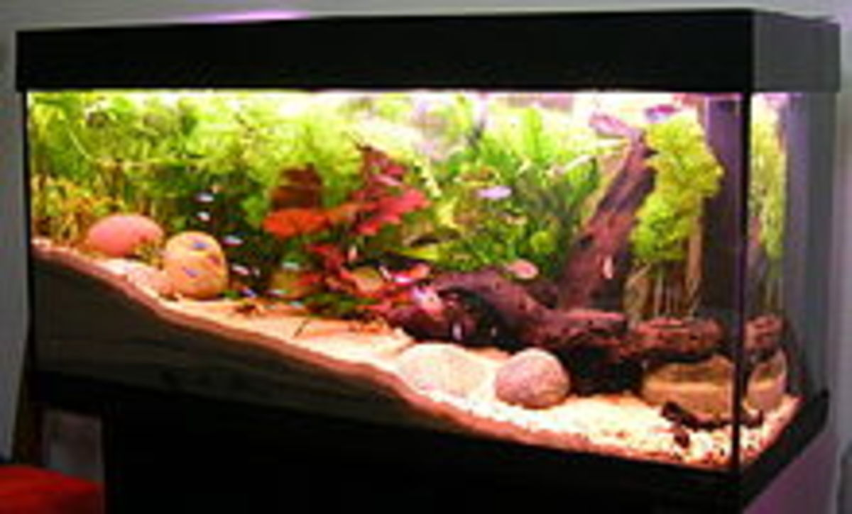 Watering Houseplants With Fish Tank Water Horticulture