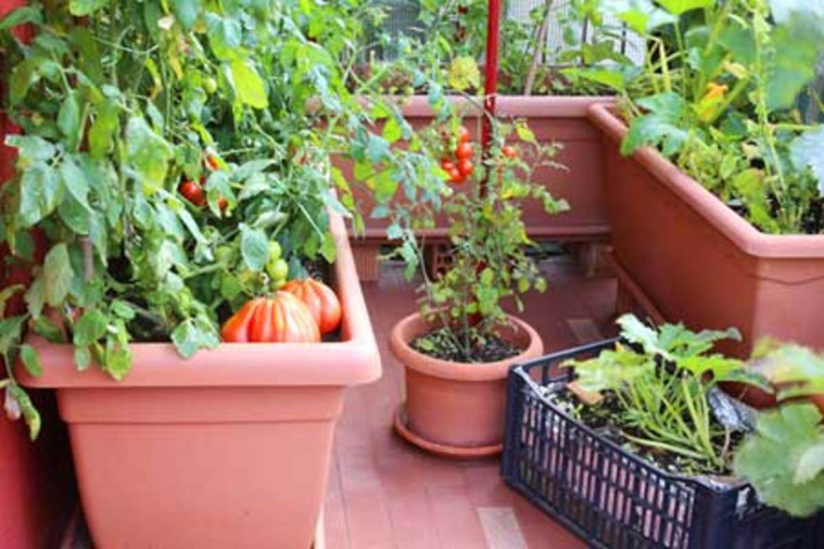 small space vegetable garden