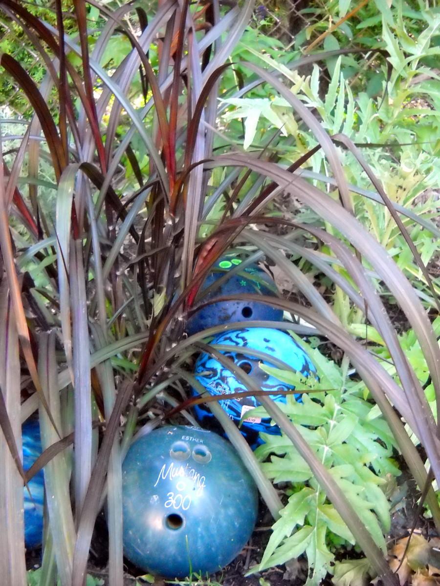 'Vertigo' flanked by a Cardoon, 2 invisible Eryngiums and a Buddleia