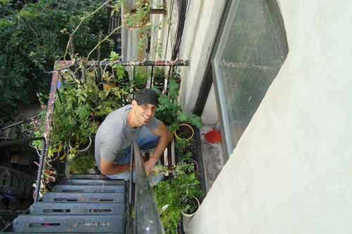 Mike Lieberman fire escape garden