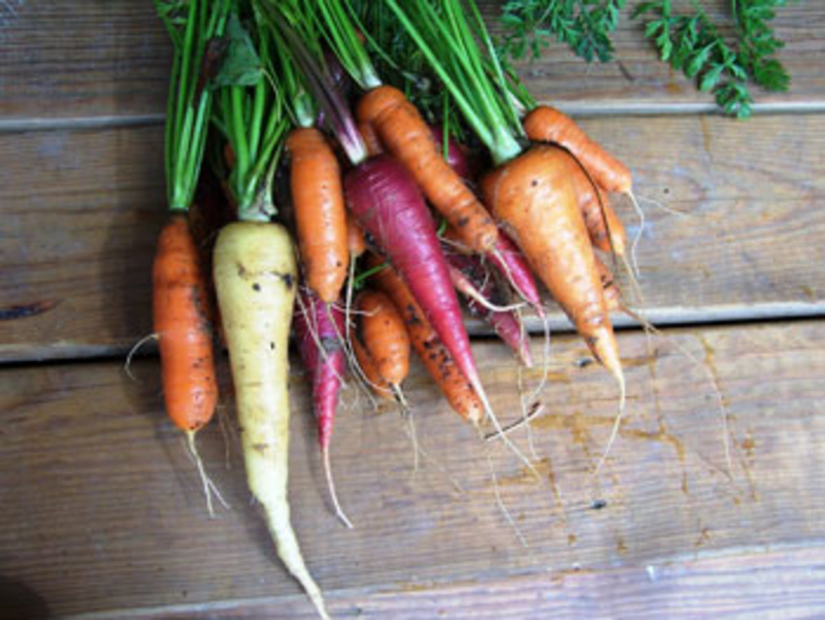 vegetable garden different color carrots