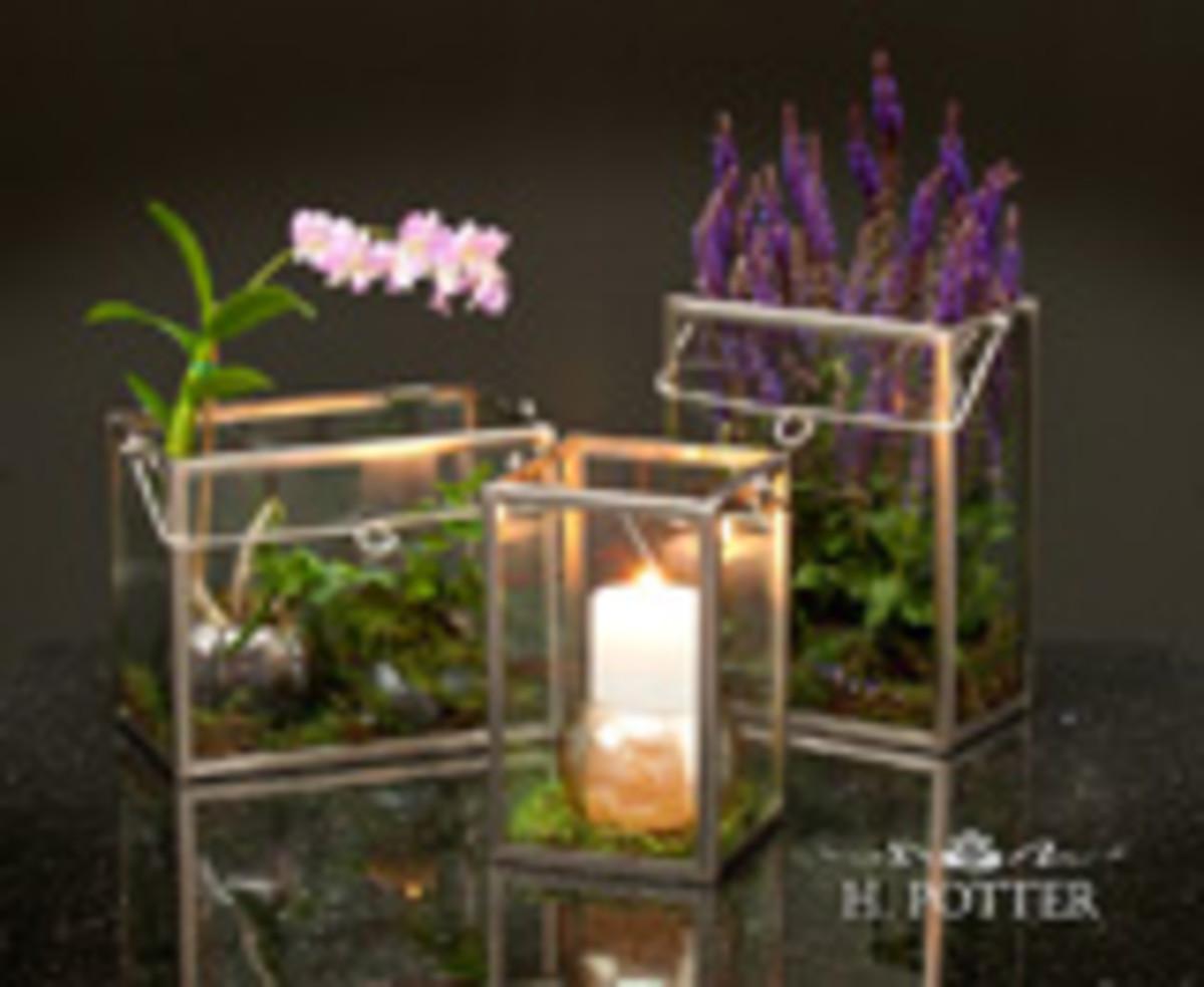 Plant Display Case