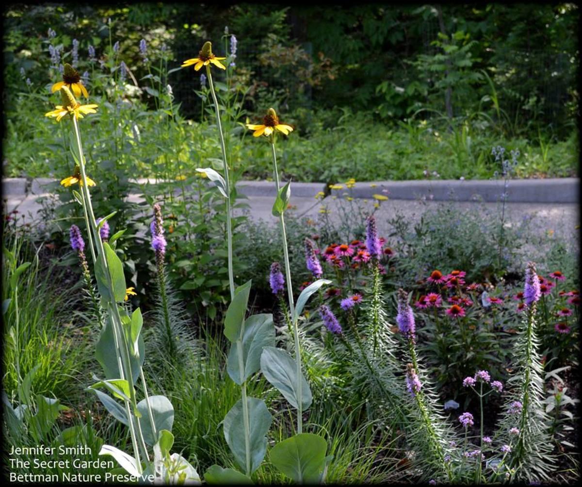 The Secret Garden Bettman Nature Preserve